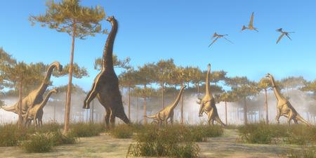 dinosaurio: Brachiosaurus navegación Brachiosaurus era un dinosaurio saurópodo herbívoro que vivió en la era jurásica de América del Norte. Una manada de exploración Brachiosaurus en copas de los árboles como una bandada de Pterodactylus reptiles voladores vuela por encima. Foto de archivo