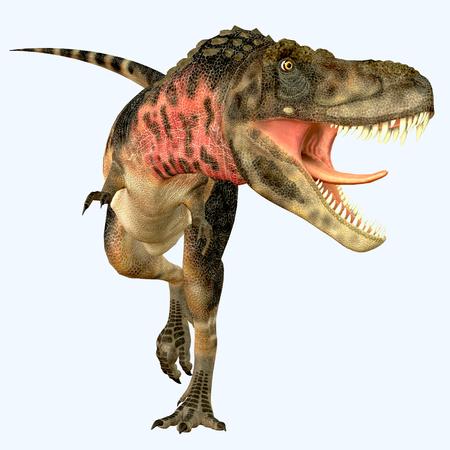 carnivore: Tarbosaurus Carnivore Dinosaur - Tarbosaurus was a carnivorous theropod dinosaur that lived during the Cretaceous Period of Asia.