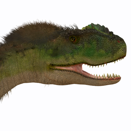 cretaceous: Rugops Dinosaur Head - Rugops was a carnivorous theropod dinosaur that lived during the Cretaceous Period of Africa.