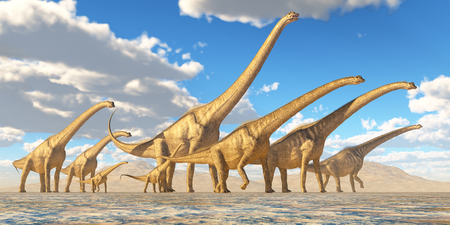 dinosaur: Sauroposeidon Herd Traveling - A herd of Sauroposeidon dinosaurs travel together in search of water and vegetation to eat. Stock Photo
