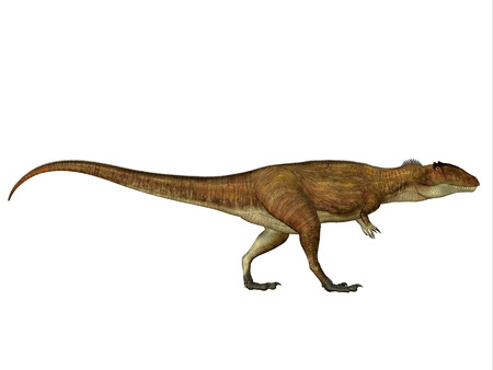 cretaceous: Carcharodontosaurus Side Profile - Carcharodontosaurus was a carnivorous theropod dinosaur that lived in Sahara, Africa during the Cretaceous Period.