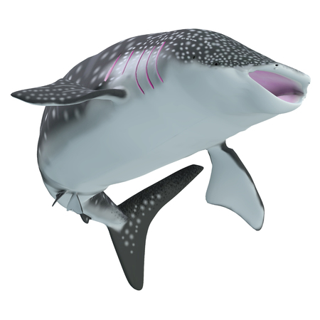 Whale Shark Body - The Whale shark is a slow-moving filter feeder and is found in tropical ocean waters.