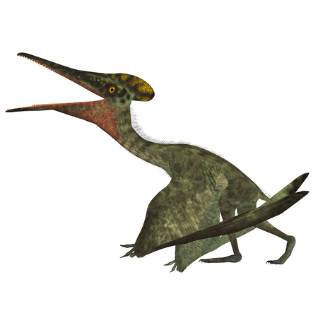 carnivorous: Pterodactylus with Folded Wings - Pterodactylus was a flying carnivorous reptile that lived in the Jurassic Period of Bavaria, Germany.