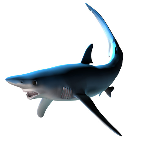 water's: Blue Shark - The Blue shark can be found around the world in deep temperate and tropical ocean waters and is a predatory fish.