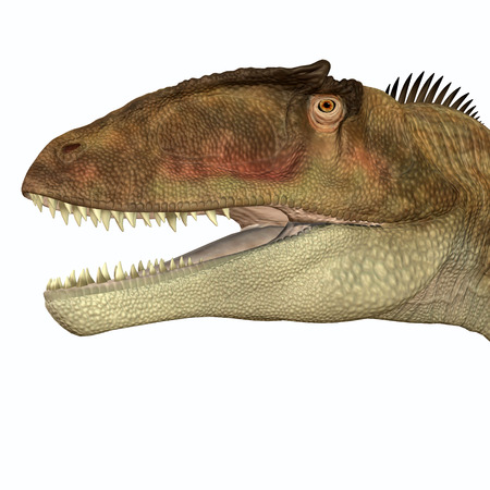 Carcharodontosaurus Head - Carcharodontosaurus was a carnivorous theropod dinosaur that lived in Sahara, Africa during the Cretaceous Period. Stock fotó