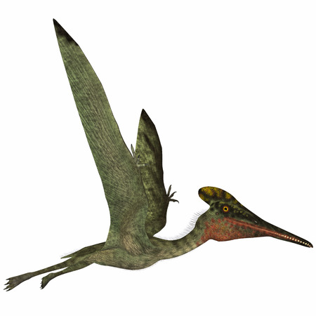 pterodactyl: Pterodactylus Side Profile - Pterodactylus was a flying carnivorous reptile that lived in the Jurassic Period of Bavaria, Germany. Stock Photo