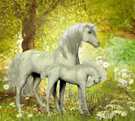 Unicorni e margherite bianche - Una madre unicorno bianco porta il suo puledro in una foresta magica piena di fiori primaverili. Archivio Fotografico - 43639193