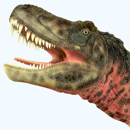 carnivorous: Tarbosaurus Dinosaur Head - Tarbosaurus was a carnivorous theropod dinosaur that lived during the Cretaceous Period of Asia. Stock Photo