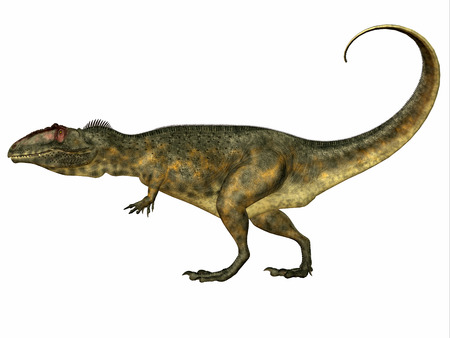 carnivore: Giganotosaurus Side Profile - Giganotosaurus was a theropod carnivorous dinosaur that lived in the Cretaceous Period of Argentina. Stock Photo