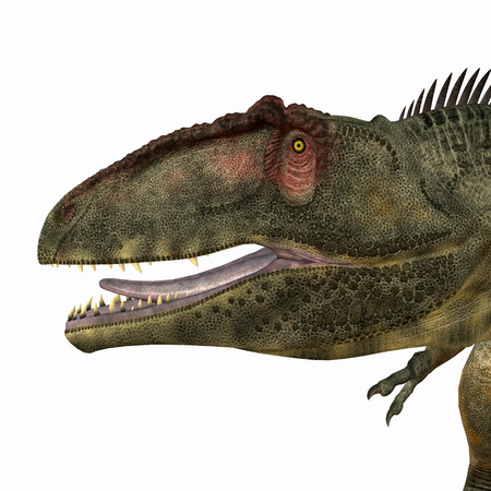 lived: Giganotosaurus Head - Giganotosaurus was a theropod carnivorous dinosaur that lived in the Cretaceous Period of Argentina. Stock Photo