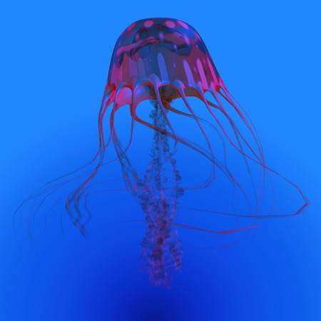 reef fish: Red Glowing Jellyfish - The Jellyfish is a transparent gelatinous predator that uses its stinging tentacles to catch fish and small prey.