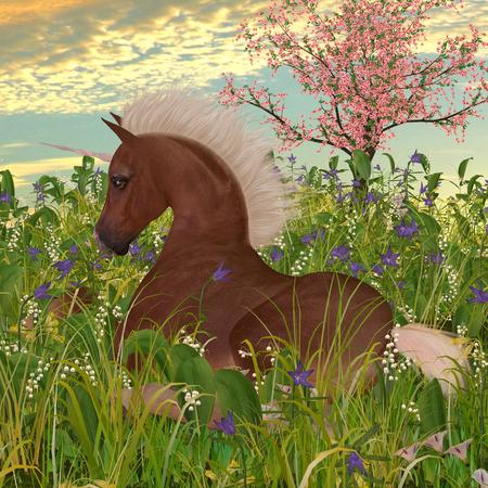 lies down: Belgian Unicorn Foal - A Belgian unicorn foal lies down in a meadow full of beautiful spring flowers.