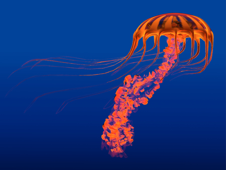 jellyfish: Orange Glowing Jellyfish - The Jellyfish is a transparent gelatinous predator that uses its stinging tentacles to catch fish and small prey.