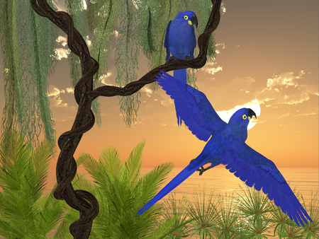 wildfowl: Hyacinth Macaws - The Hyacinth Macaw is a large parrot with blue coloring and is found in central and eastern South America.