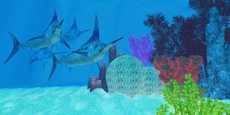 Marlin Fish en busca de presas - Marlin mirada peces depredadores a lo largo de un arrecife de coral del océano de presas para cazar y comer. Foto de archivo - 45164108