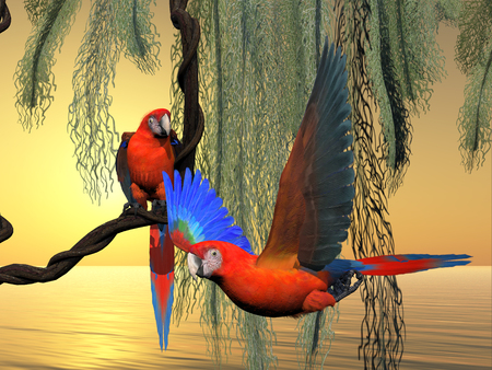 red america: Red and Green Macaws - The Red and Green Macaw is an endangered species of parrot and is found in South America.