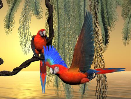 america del sur: Rojo y verde Guacamayos - El rojo y verde Macaw es una especie en peligro de loro y se encuentra en América del Sur.