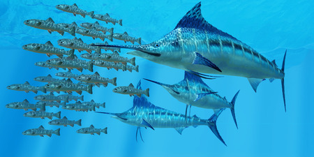 Marlin after a Fish School - A school of Amemasu fish try to evade three large Marlin predators in the open ocean. Stok Fotoğraf - 45164115