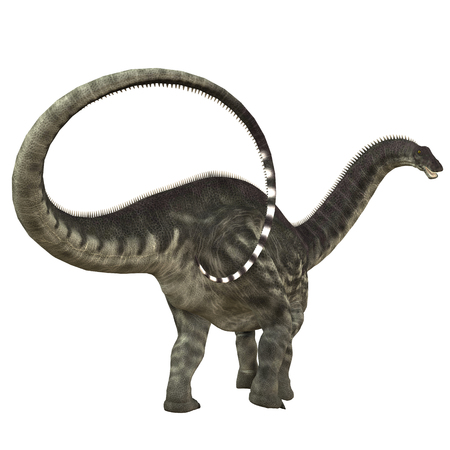 Apatosaurus Dinosaur Tail - Apatosaurus also called Brontosaurus was a herbivorous sauropod dinosaur that lived in the Jurassic Period of North America. Stock Photo