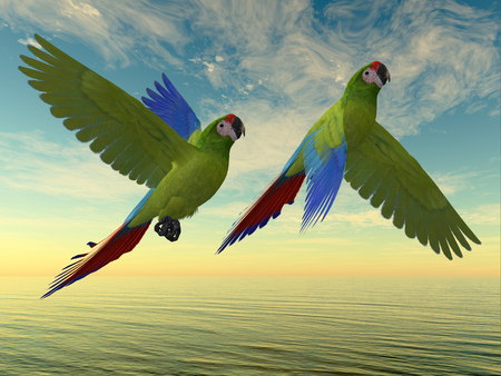 green parrot: Military Macaws - The Military Macaw is a large parrot and is found in Mexico and South America.