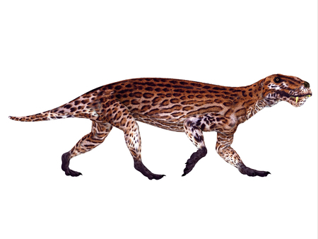 catlike: Lycaenops Permian Dinosaur - Lycaenops was a carnivorous mammal-like reptile that lived in South Africa during the Permian Period.