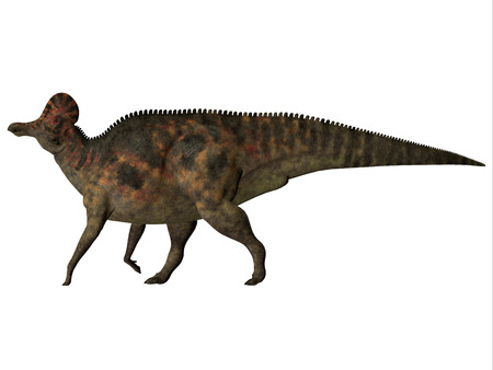 Corythosaurus on White - Corythosaurus is a herbivorous duck-billed dinosaur that lived in North America during the Cretaceous Period.