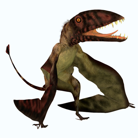 jurassic: Dimorphodon Pterosaur - Dimorphodon was a carnivorous flying Pterosaur that liived in the Jurassic Period of England. Stock Photo