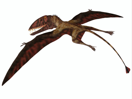 pterodactyl: Dimorphodon on White - Dimorphodon was a carnivorous flying Pterosaur that lived in the Jurassic Period of England. Stock Photo
