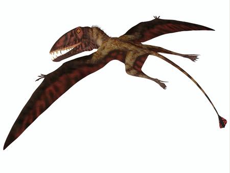 pterosaur: Dimorphodon on White - Dimorphodon was a carnivorous flying Pterosaur that lived in the Jurassic Period of England. Stock Photo