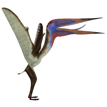 vertebrate: Zhejiangopterus Reptile - Zhejiangopterus was a carnivorous pterosaur dinosaur that lived in China during the Cretaceous Period. Stock Photo