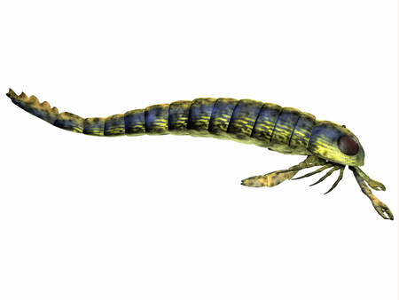 sea side: Pterygotus Side Profile - Pterygotus was a predatory sea scorpion that lived all over the world from the Silurian to Devonian Eras.