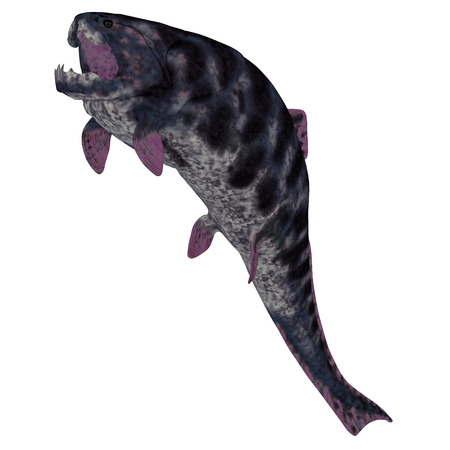 prehistoric fish: Dunkleosteus Fish on White - Dunkleosteus is a Devonian prehistoric fish that lived in the seas of North America, Poland, Belgium and Morocco.