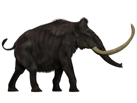 woolly: Woolly Mammoth Side Profile - The Woolly Mammoth was a herbivore that lived during the Pleistocene Period of Eurasia and North America.