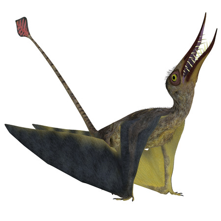Rhamphorhynchus Pterosaur - Rhamphorhynchus was a carnivorous pterosaur that lived in England, Tanzania, Spain and Germany during the Jurassic Periods.