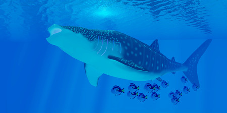 smallest: Whale Shark Feeding - Whale sharks are the largest shark in the ocean but feed on the smallest plankton creatures.