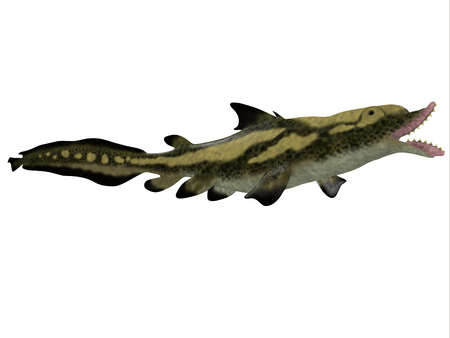 Edestus Shark Side Profile - Edestus is a prehistoric shark that lived in the Carboniferous Period of England, Russia and North America.