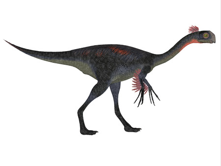 was: Gigantoraptor on White - Gigantoraptor was a theropod dinosaur that lived in Inner Mongolia, China in the Cretaceous Period.