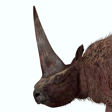 Elasmotherium Head - Elasmotherium is an extinct mammal that lived in the Pleistocene Period of Russia, Ukraine, and Moldova. Фото со стока
