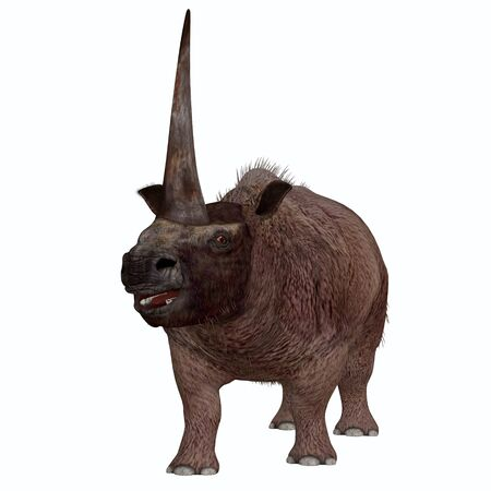 Elasmotherium on White - Elasmotherium is an extinct mammal that lived in the Pleistocene Period of Russia, Ukraine, and Moldova.