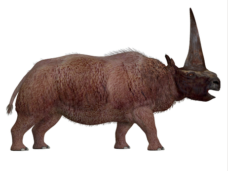 extinct: Elasmotherium Side Profile - Elasmotherium is an extinct mammal that lived in the Pleistocene Period of Russia, Ukraine, and Moldova. Stock Photo