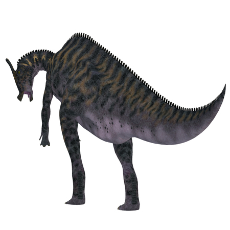 behemoth: Saurolophus Dinosaur Tail - Saurolophus was a Hadrosaur herbivorous dinosaur that lived in Mongolia, Asia in the Cretaceous Period. Stock Photo