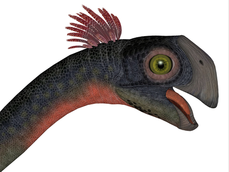 prehistoric era: Gigantoraptor Dinosaur Head - Gigantoraptor was a theropod dinosaur that lived in Inner Mongolia, China in the Cretaceous Period. Stock Photo