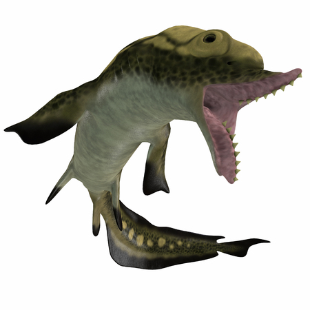 Carboniferous Edestus Shark - Edestus is a prehistoric shark that lived in the Carboniferous Period of England, Russia and North America.