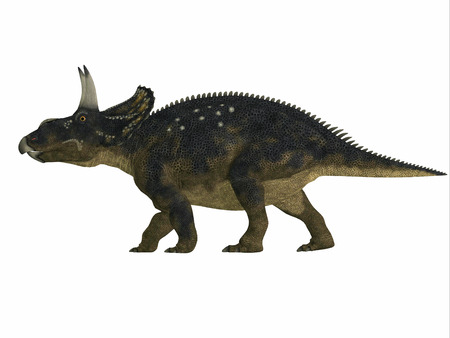 mesozoic: Nedoceratops Side Profile - Diceratops is a herbivorous ceratopsian dinosaur that lived in the Cretaceous Period of Wyoming, North America.