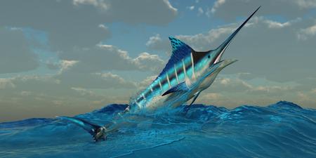 pez espada: Blue Marlin Burst - El Marlin Azul es un depredador y es un pez juego favorito entre los pescadores de aguas profundas.