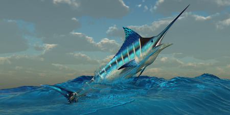 billfish: Blue Marlin Burst - The Blue Marlin is a predator and is a favorite game fish with deep sea anglers. Stock Photo