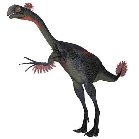 omnivore animal: Gigantoraptor Dinosaur on White - Gigantoraptor was a theropod dinosaur that lived in Inner Mongolia, China in the Cretaceous Period.