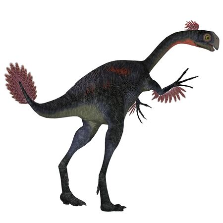 prehistoric era: Gigantoraptor Dinosaur Tail - Gigantoraptor was a theropod dinosaur that lived in Inner Mongolia, China in the Cretaceous Period.