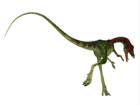 bipedal: Compsognathus Dinosaur Tail - Compsognathus was a small carnivorous theropod dinosaur that lived during the Jurassic Period of Europe.