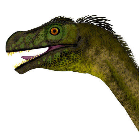 prehistoric era: Ornitholestes Dinosaur Head - Ornitholestes was a small carnivorous dinosaur that lived in the Jurassic Period of Western Laurasia which is now North America.